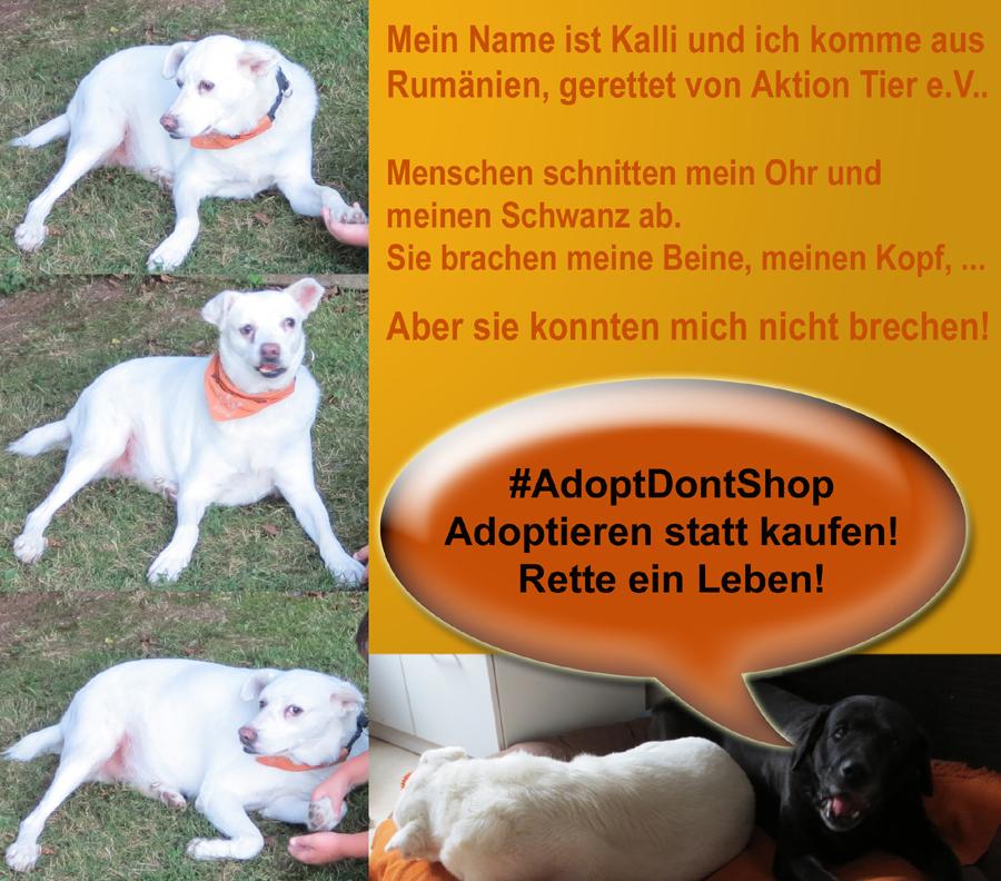 Adoptieren statt kaufen - adopt dont shop